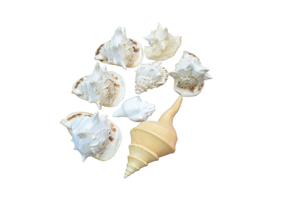 CONCH THERAPY